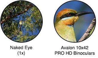 Avalon 10×42 PRO HD Platinum